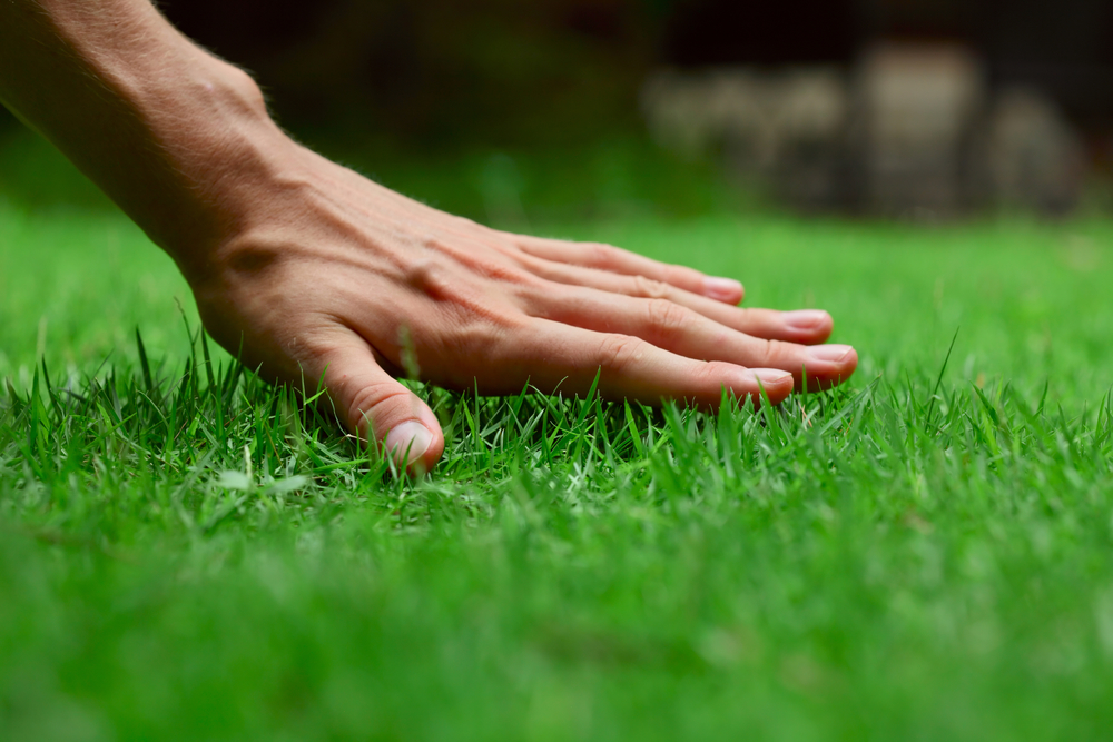 Get a Beautiful Lawn with the Lawn Care Services